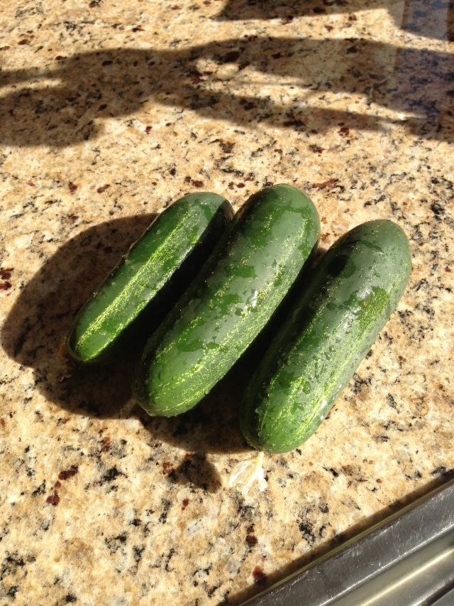 cucumbers from my garden